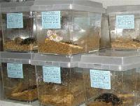 昆虫イベント「クワガタ」「かぶと」販売
