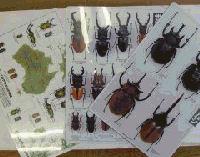昆虫イベント 大人気商品