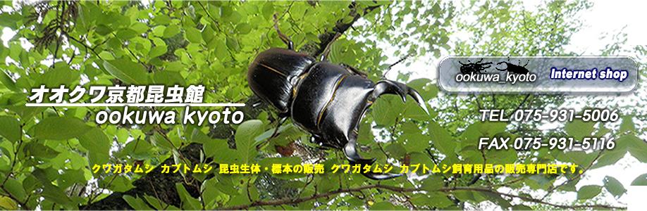 オオクワ京都昆虫館TOP1