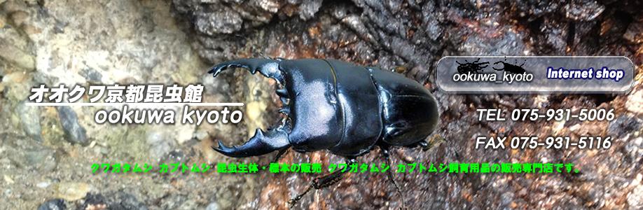 オオクワ京都昆虫館TOP2