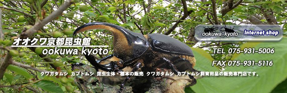 オオクワ京都昆虫館TOP3