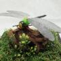 ギンヤンマ(銀蜻蜓)♂76(レプリカ標本)