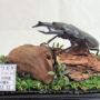 オオクワガタ♂81(ジオラマ標本)