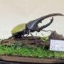 D.Hヘラクレス♂140(レプリカ標本)