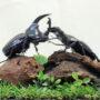 ケンタウルスVSタランドゥスの戦い(レプリカ標本)