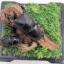 オオクワガタ♂67+♀39(ジオラマ標本)